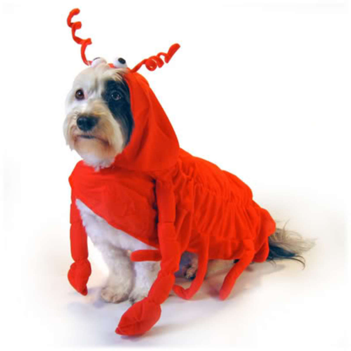 Let your dog claw to the top of the best dressed dog this Halloween