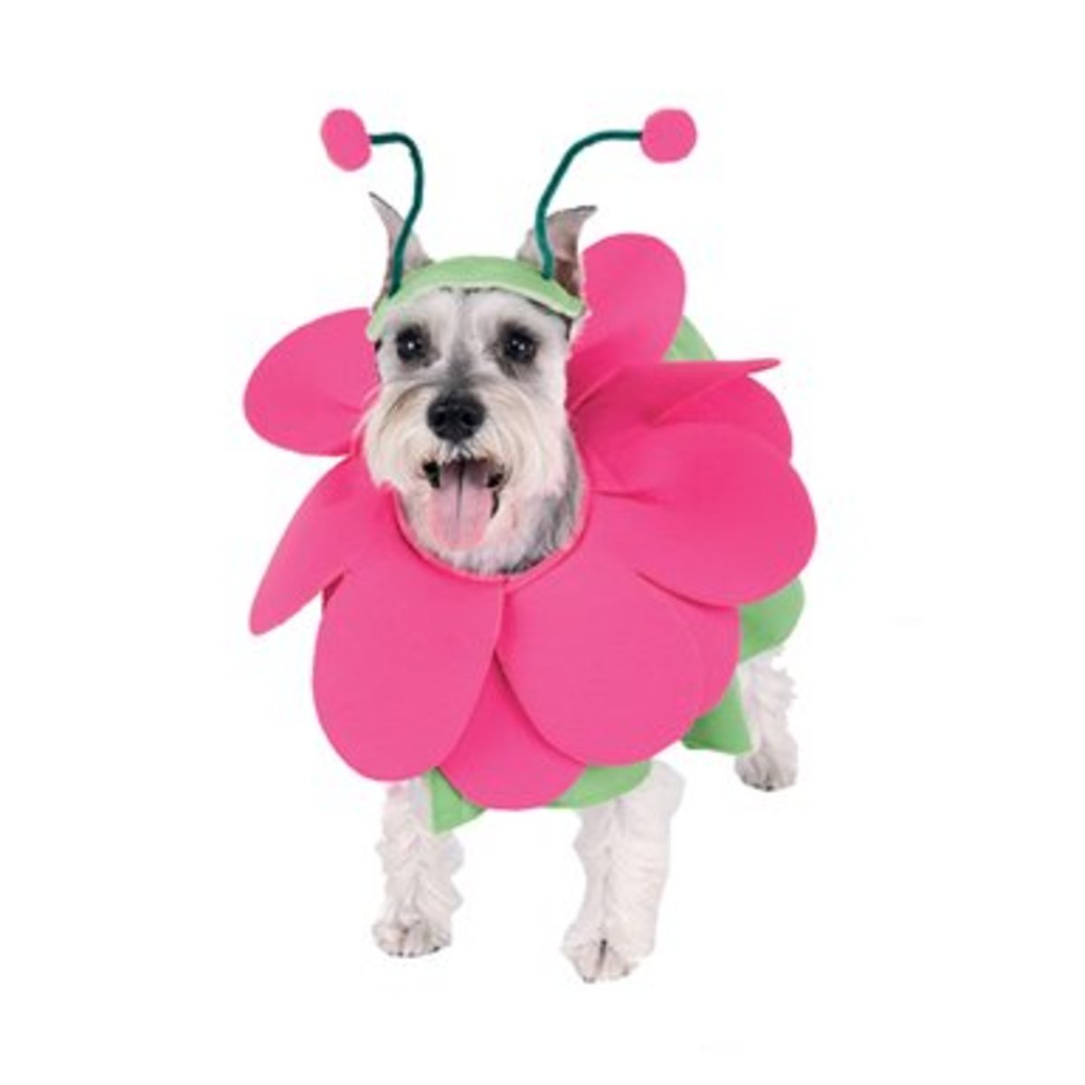 Is it a snout or the cutest flower dog costume ever!