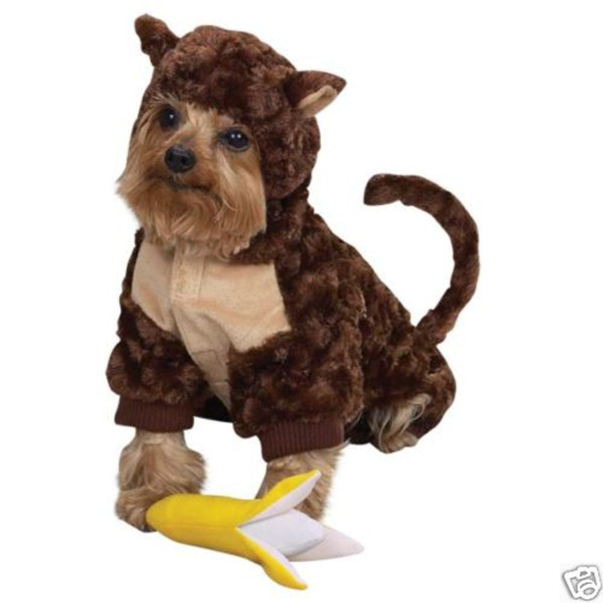 Dog Monkey costume is the most adorable for Halloween 2011. Even comes with a banana squeaky toy for added fun!