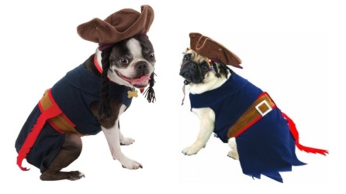 cute jack sparrow costume for dogs