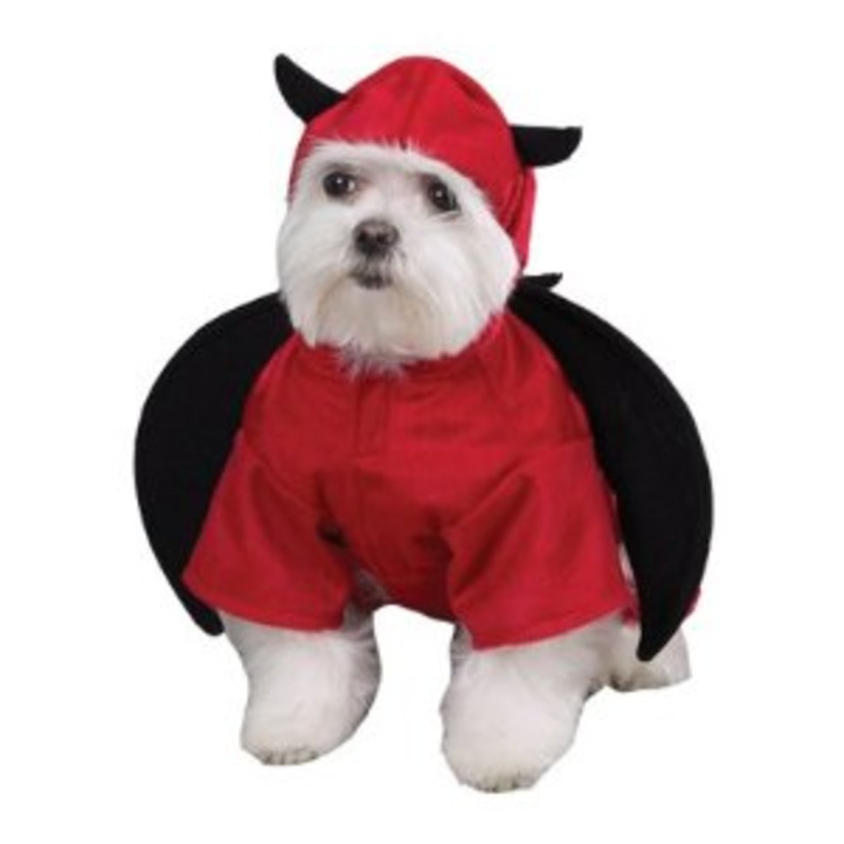 Your pup is bound to cause some trouble in this Halloween costume.