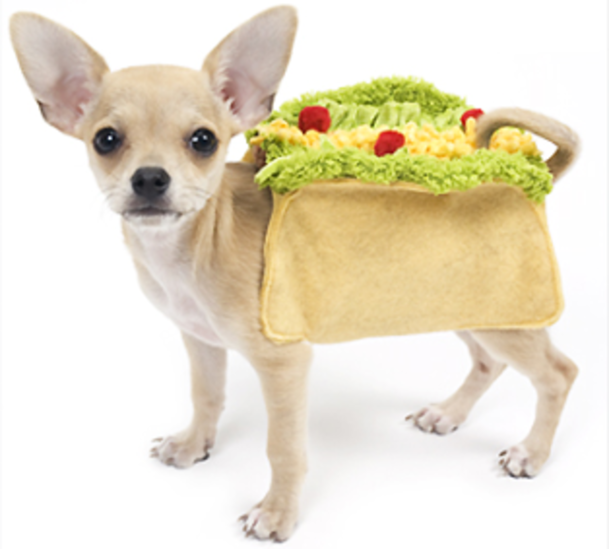 This delicious Taco Dog Costume makes the list of the best of Dog Costume for 2011