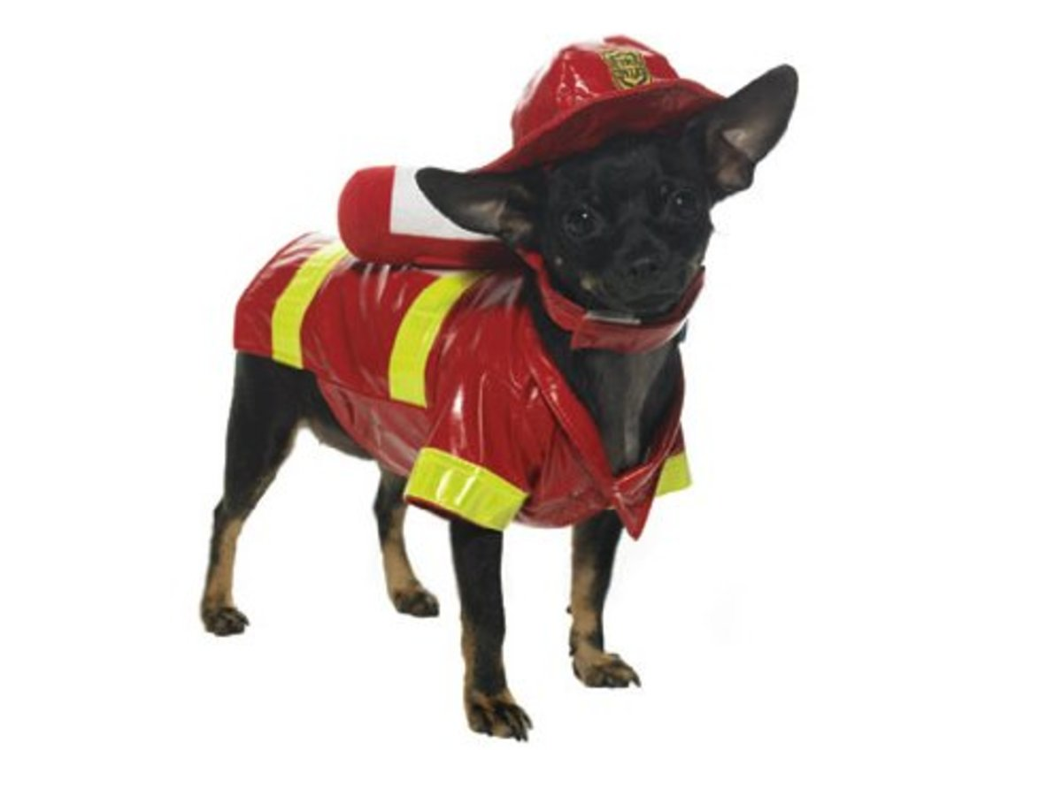 Dress your fire dog in the cutest chief costume