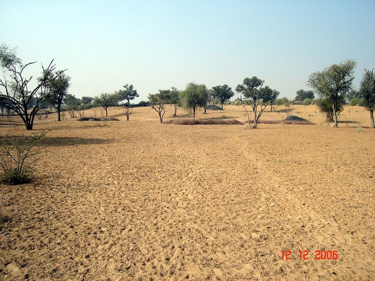 The Thar Desert a type of Semiarid Desert.