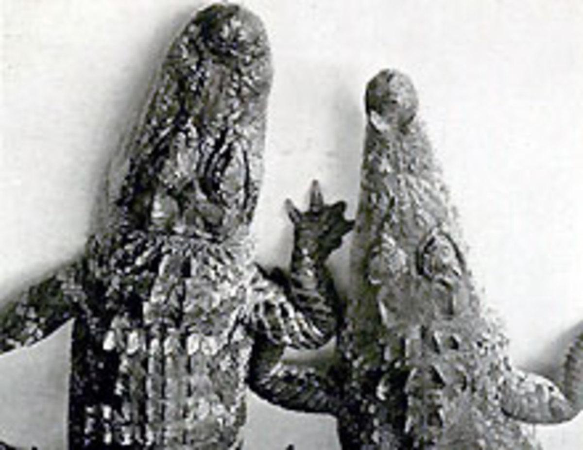 Alligator ~ U-shape snout  &  Crocodile ~ V-shape snout
