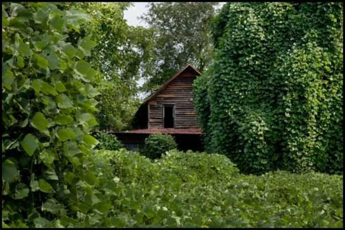 Kudzu devouring a house on Wash Rider Road