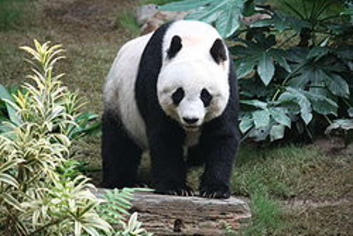 Panda wasn't that nice to Hubpages!