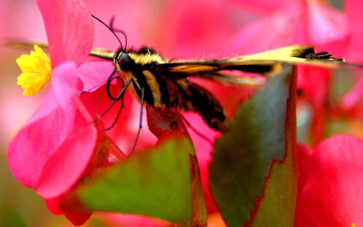 Fuzzy Butterfly in Pink and Yellow