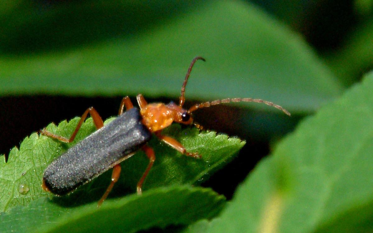 Beetle Bug on the Edge