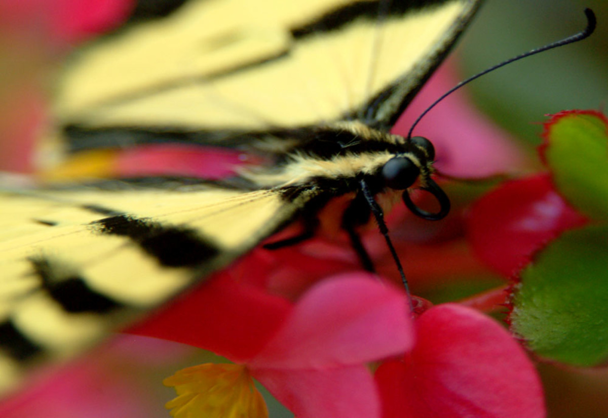 Pink and Yellow Butterfly Composition