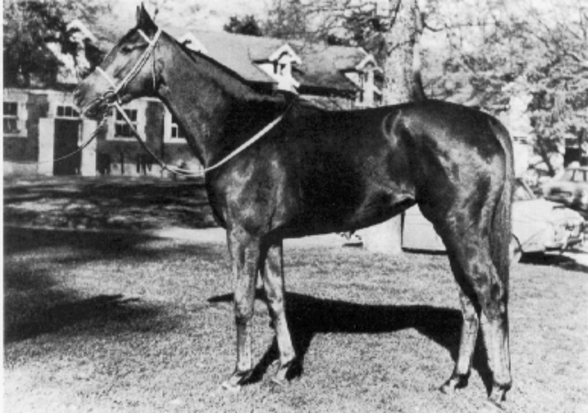 Dahlia: She became the biggest earning mare of all time