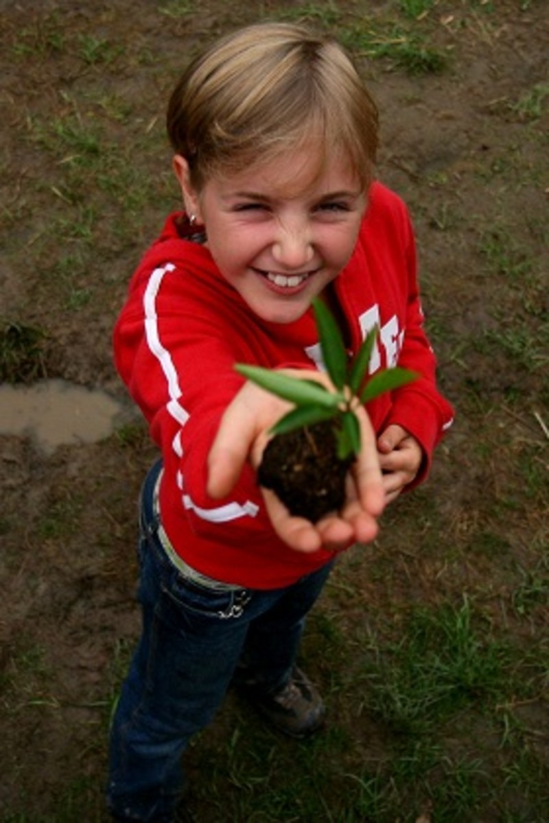 Even More Fun Classroom Activities to Interest Children / Kids in Growing Plants