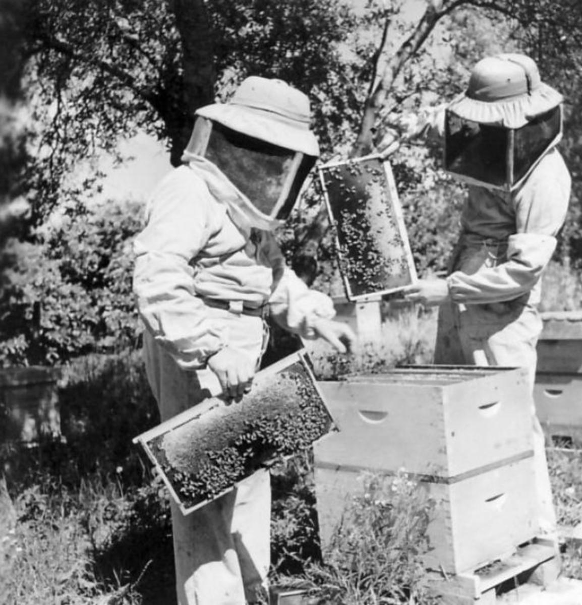 Protective Clothing for Beekeepers: Beekeeping Suits, Jackets, Veils, and Gloves