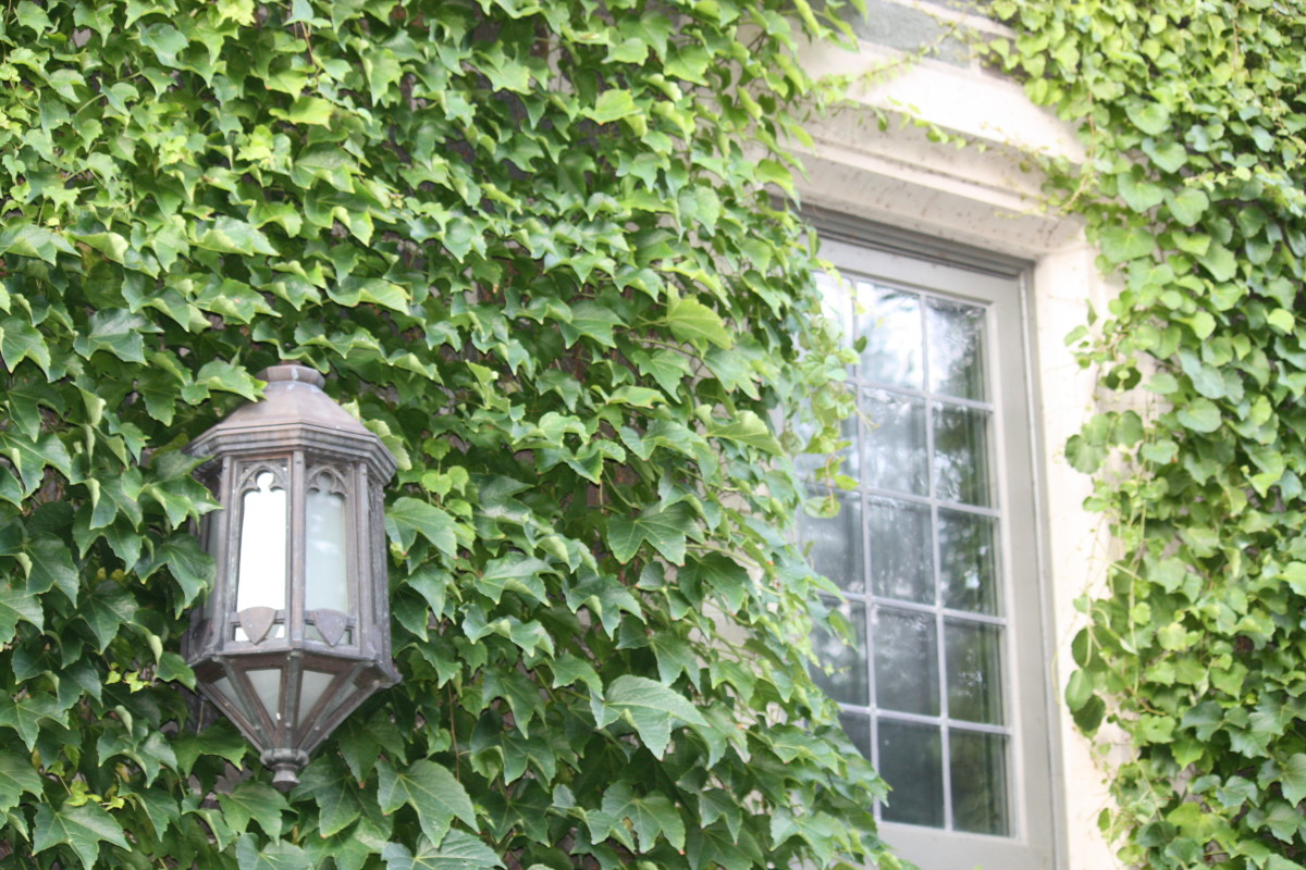 Old Lamp on dorm building. Notic the beautiful ivy climbing the walls.