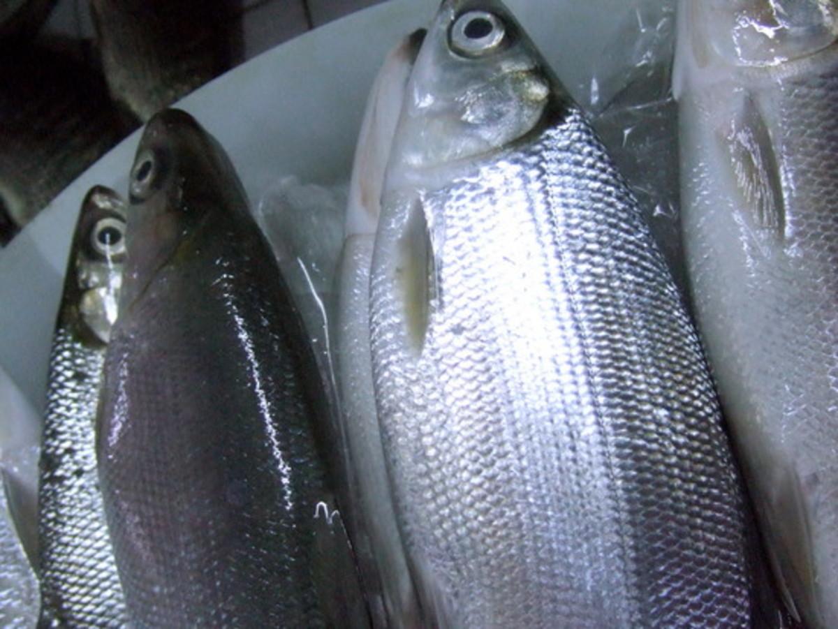 Fresh Milkfish or Bangus (Photo Credit: travelpod.com)