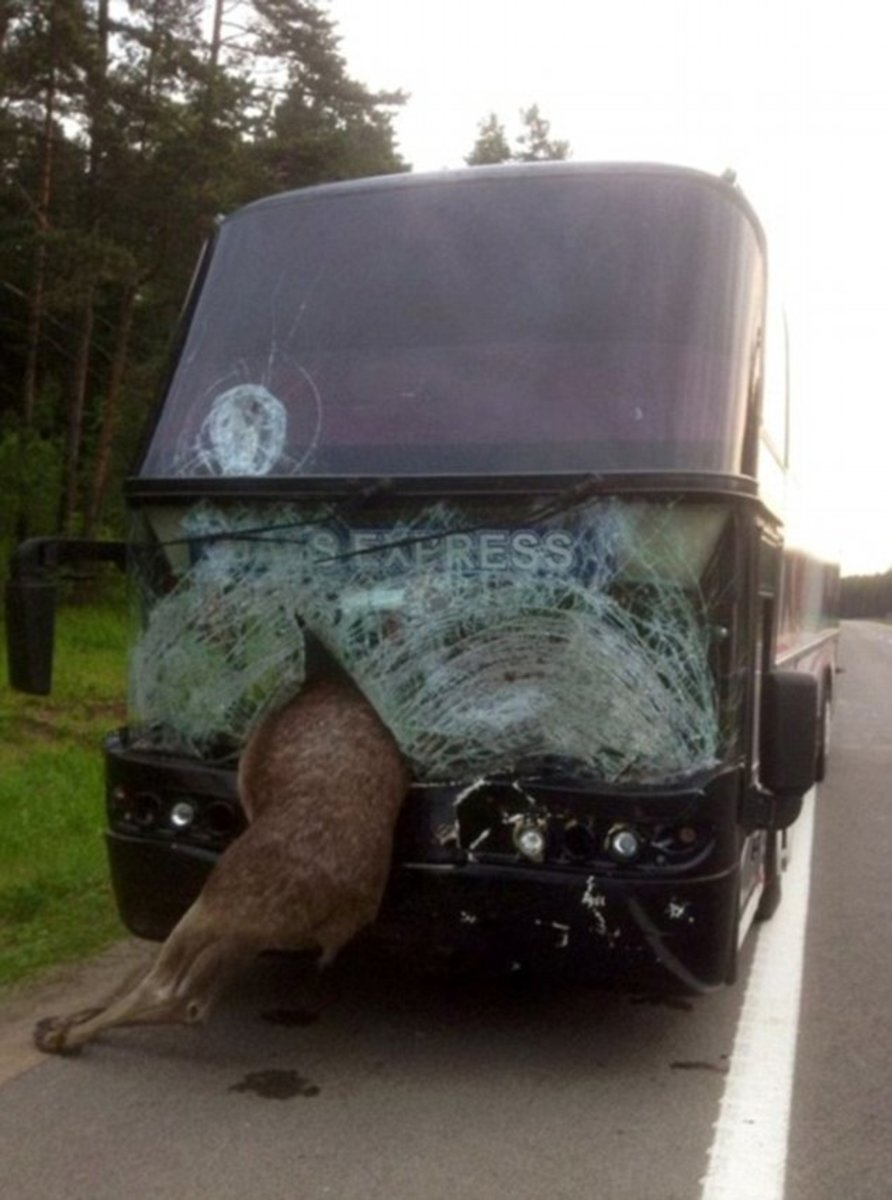 Moose hit bus at 666.6 km. into the trip.