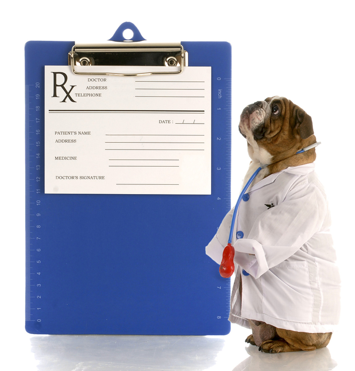 If your dog's skin is infected...a trip to the vet is in order!