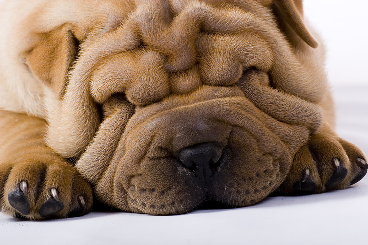 That's one wrinkled pup!