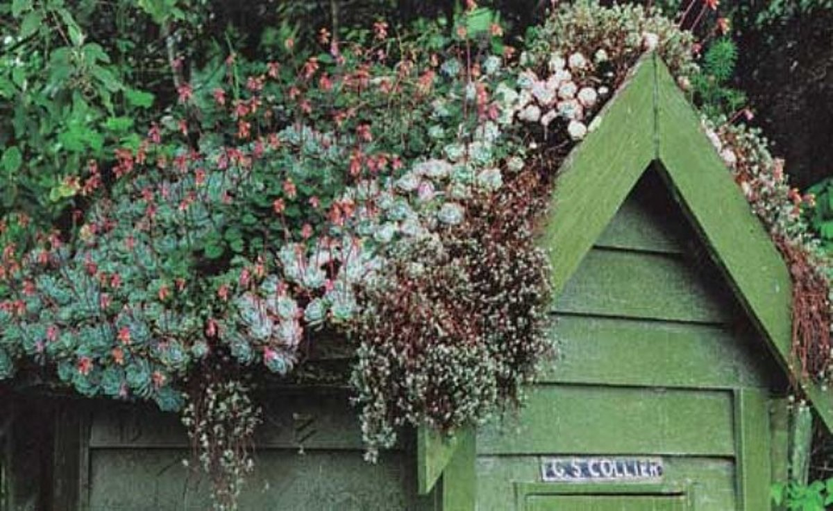 beautiful green roof top on a green painted shed with a multitude of Sedums