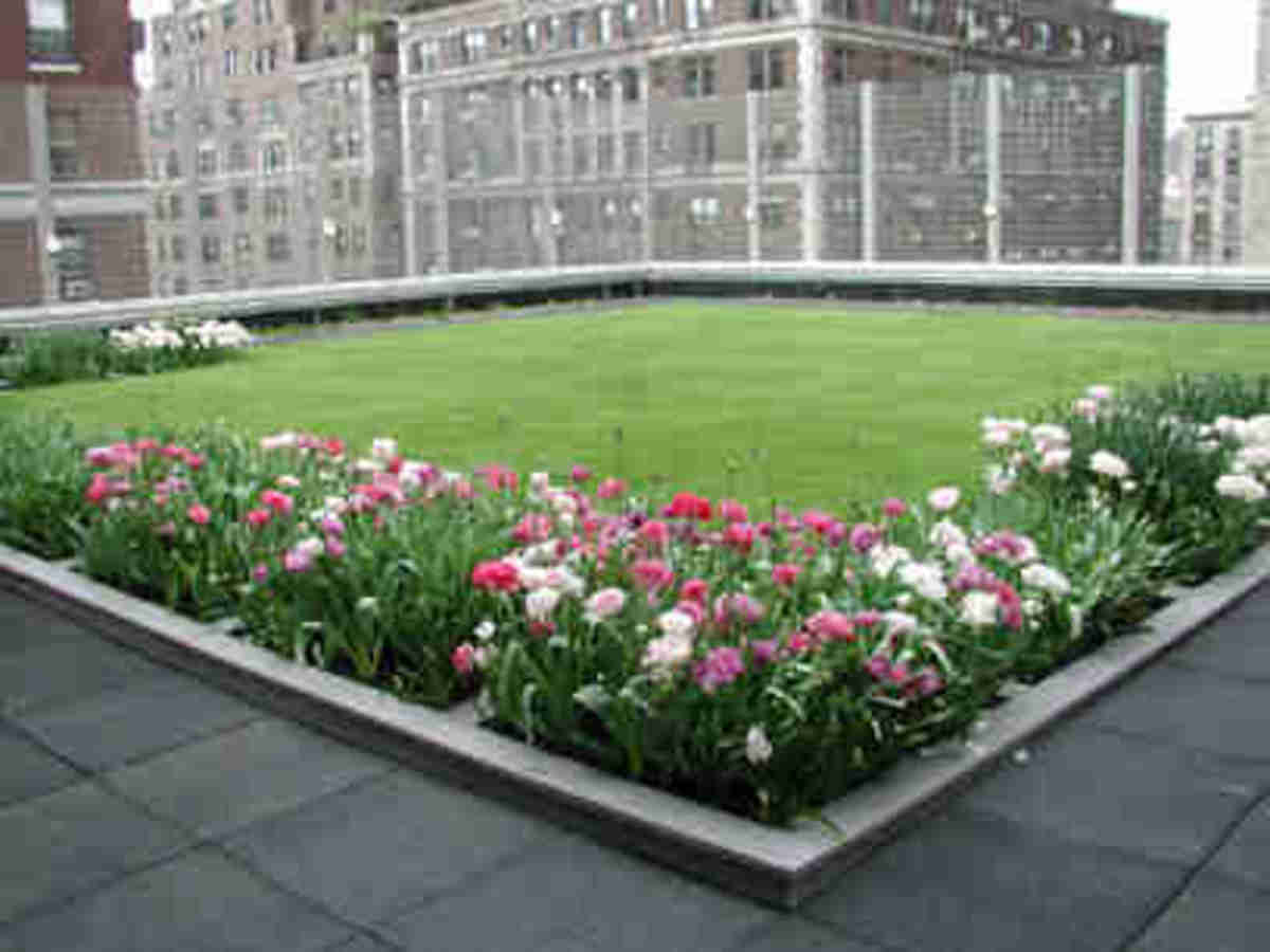 Green urban roof with flowers and walking path in NYC