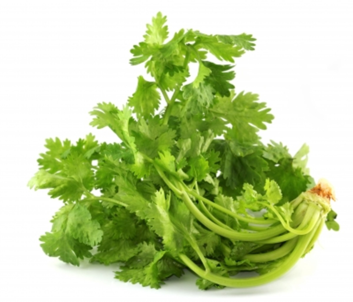 Benefits of Coriander, Ground Coriander and Its Seeds for Health