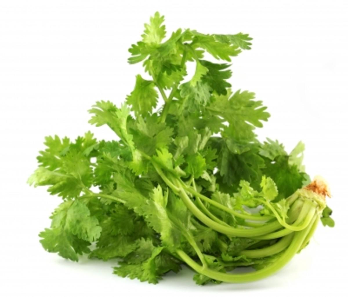 benefits-of-coriander