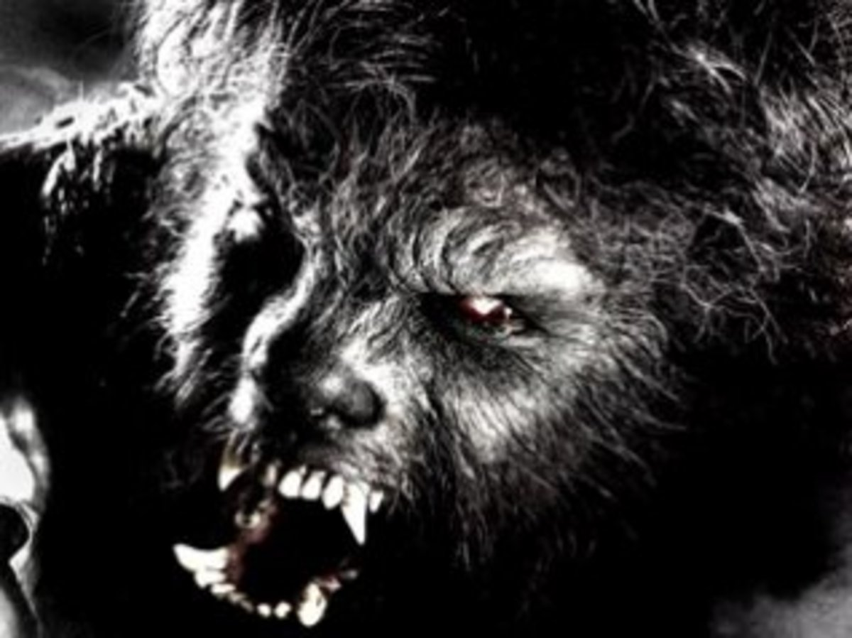 "Face of the ""Wolfman."" The original 1941 movie did a good job defining this iconic creature"