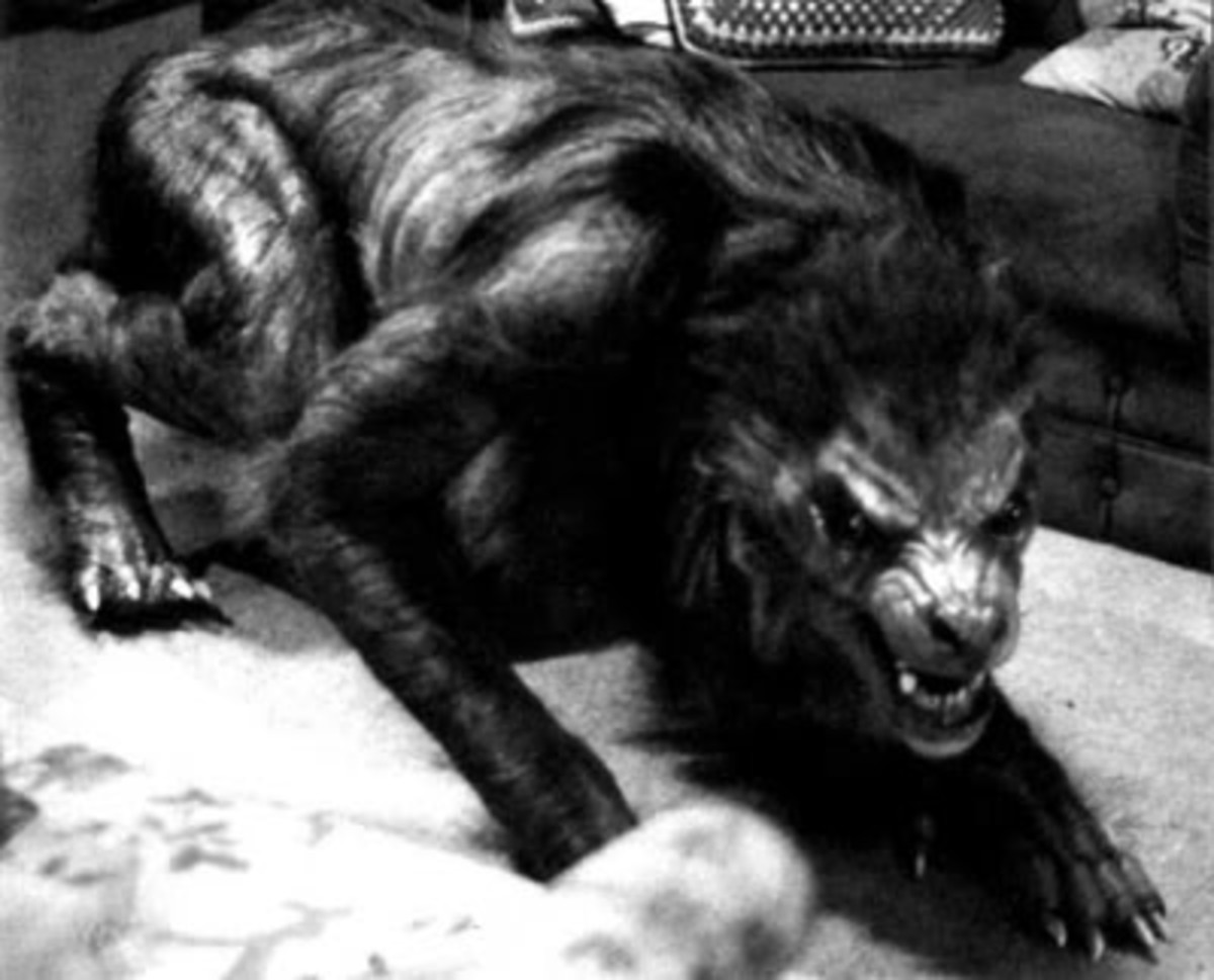 "A werewolf from, ""An American Werewolf in London."" A very good depiction of a werewolf, if a little more wolflike."