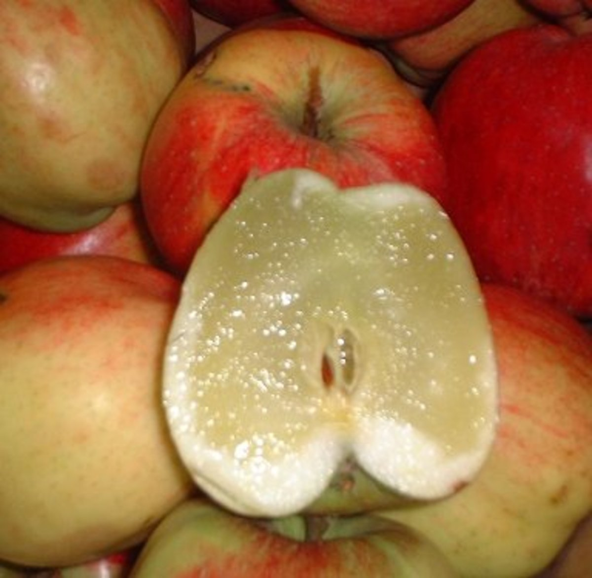 Extreme boron deficiency has caused the insides of this apple to turn soft.
