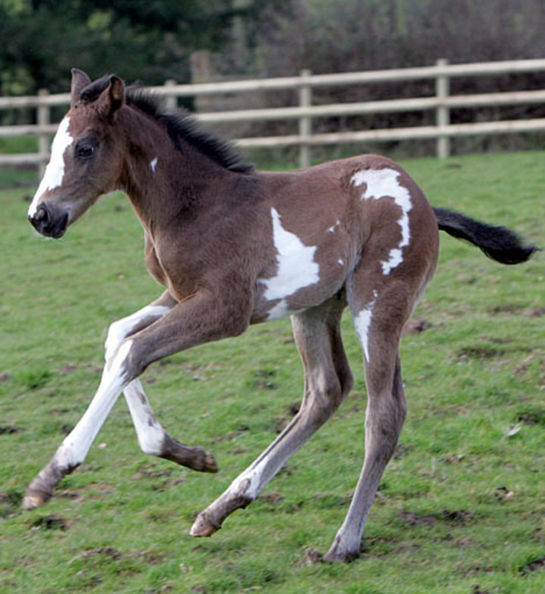 Brown and white foal.
