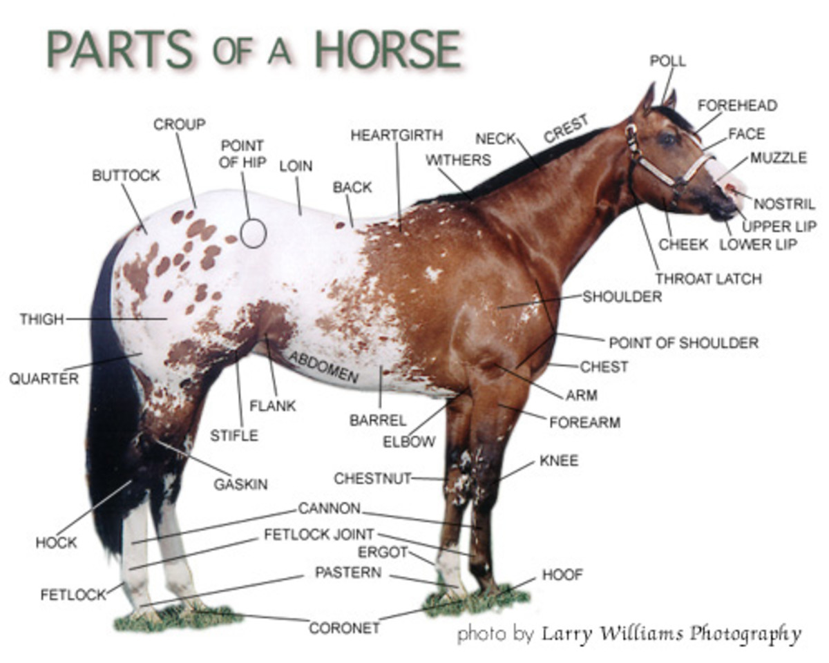 The parts of a horse.