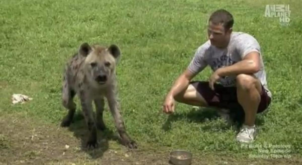 Bryan Hawn with his ex-pet Hyena in its new home.