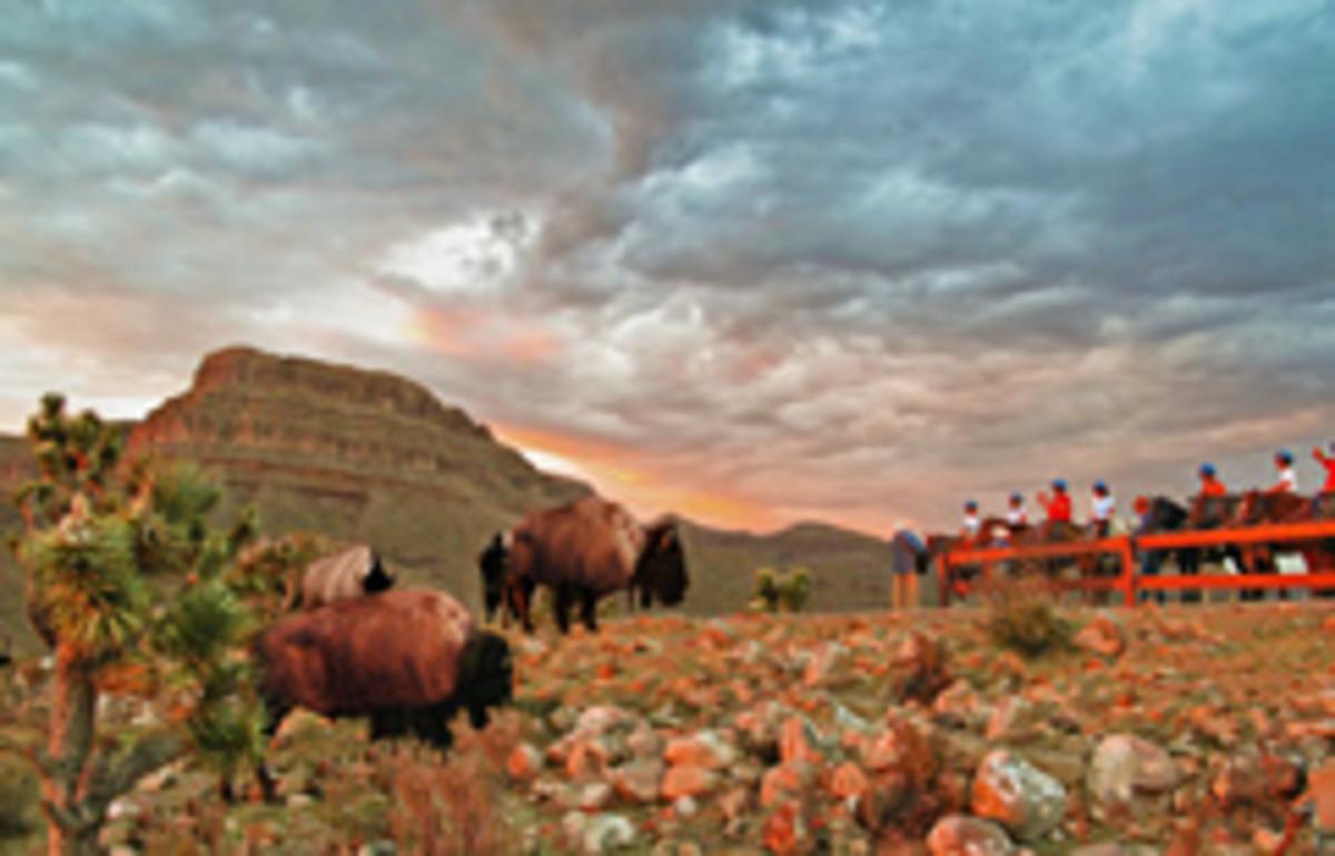 Buffalo at Grand Canyon Dude ranch