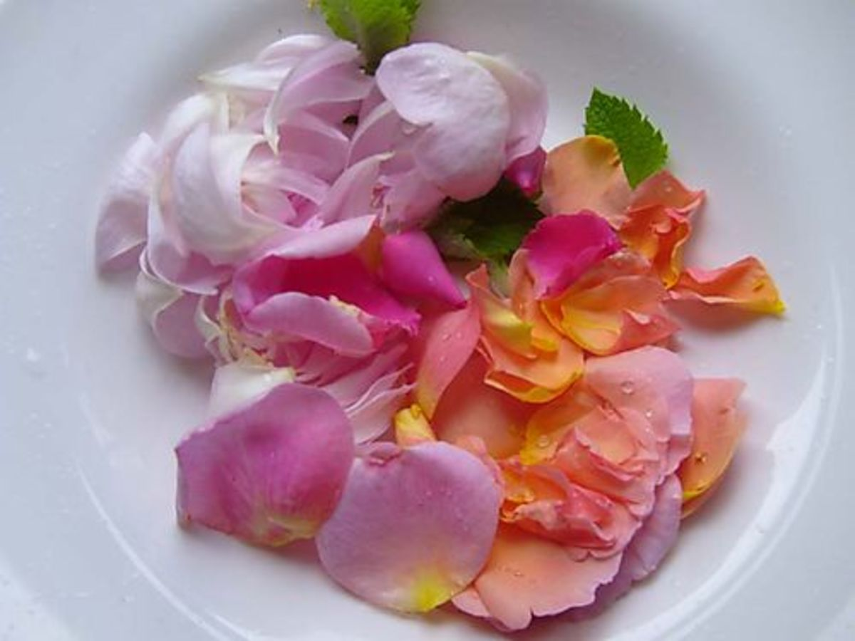 Cooling and Cleansing: The Benefits of Rose Water