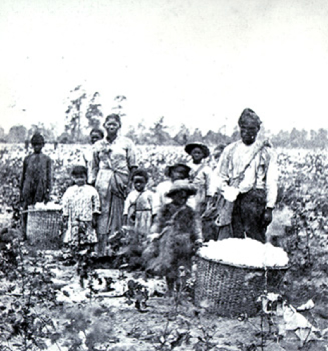 Slaves working in a cotton field