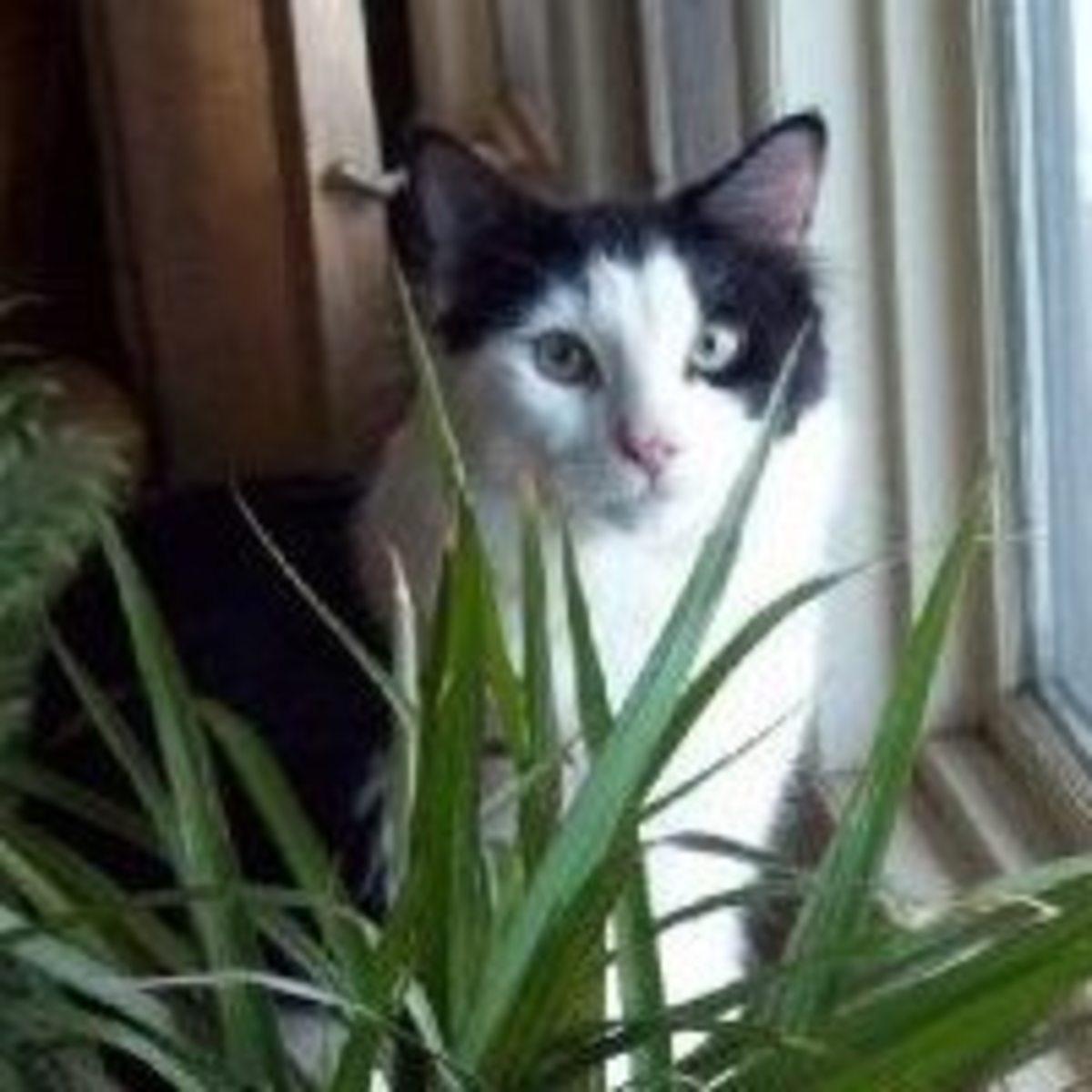 my-inbred-cat