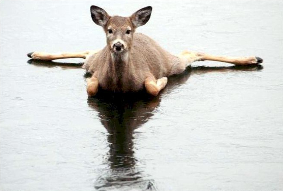 "But this deer says, ""what was I thinkin'?!"""