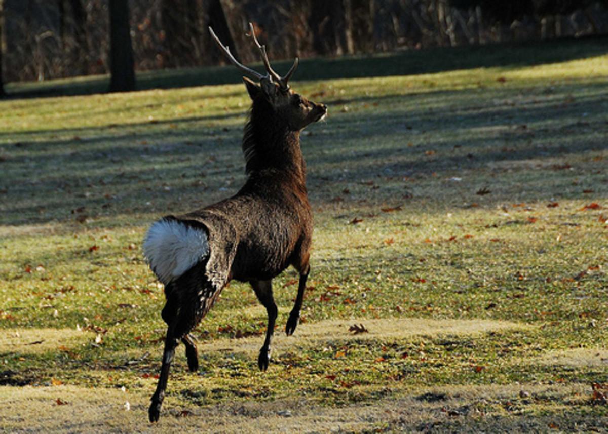 Interesting Pictures Of Deer