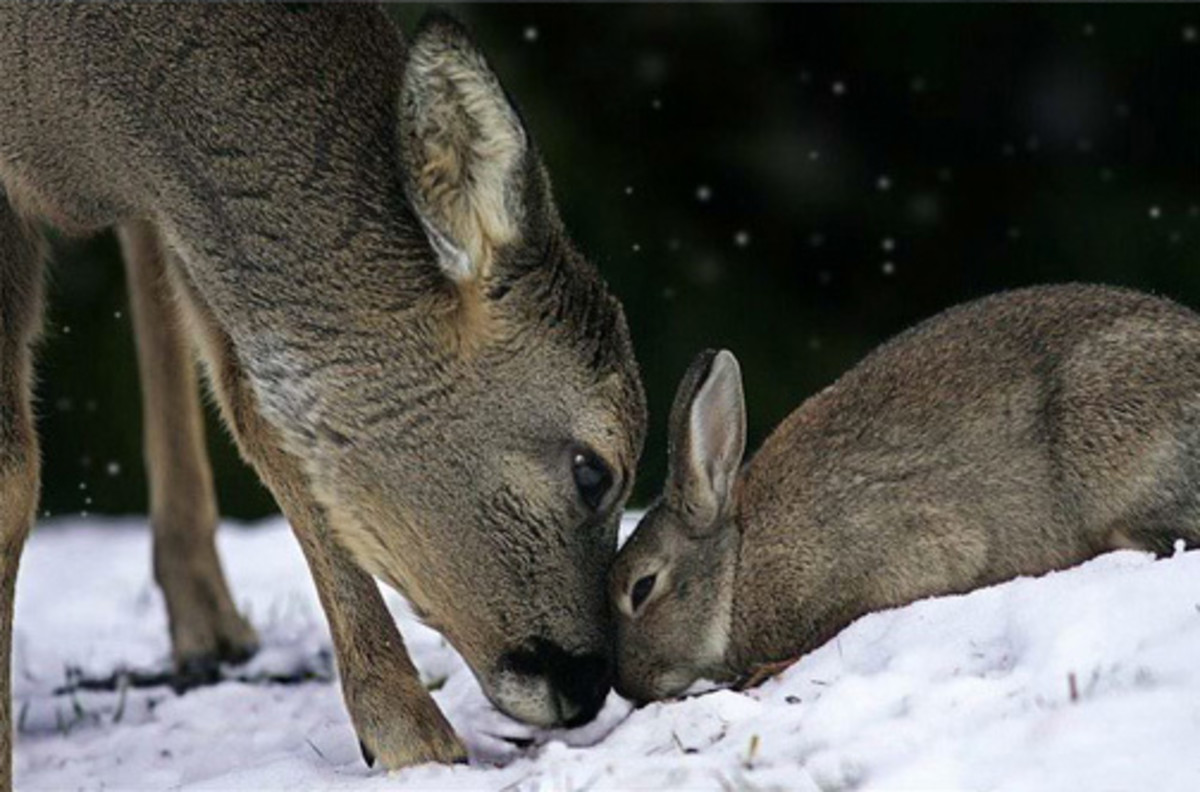 Bambi and Thumper.