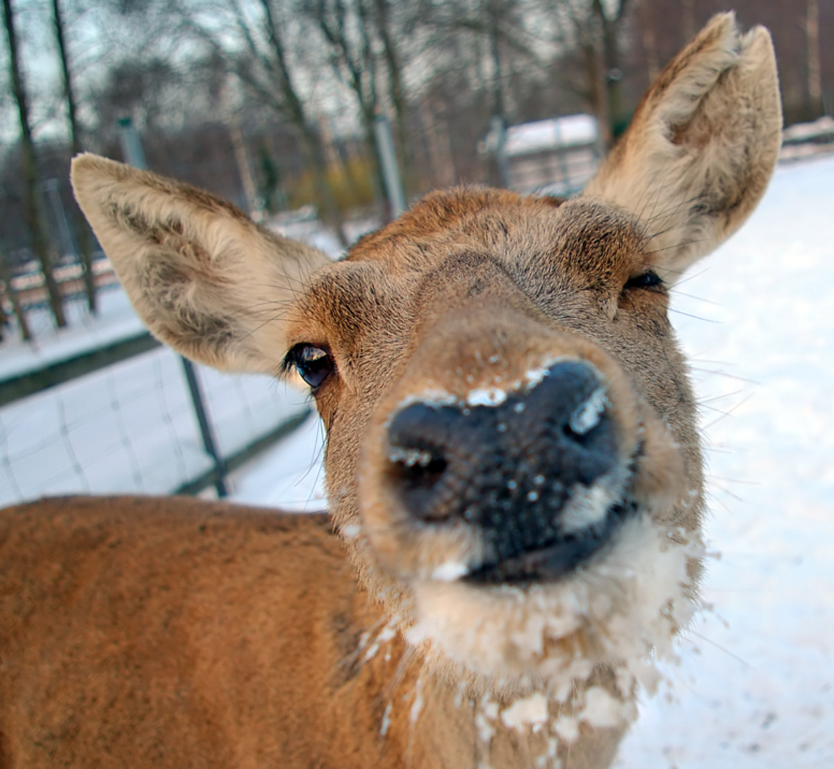 This deer is giving you a winkin'.