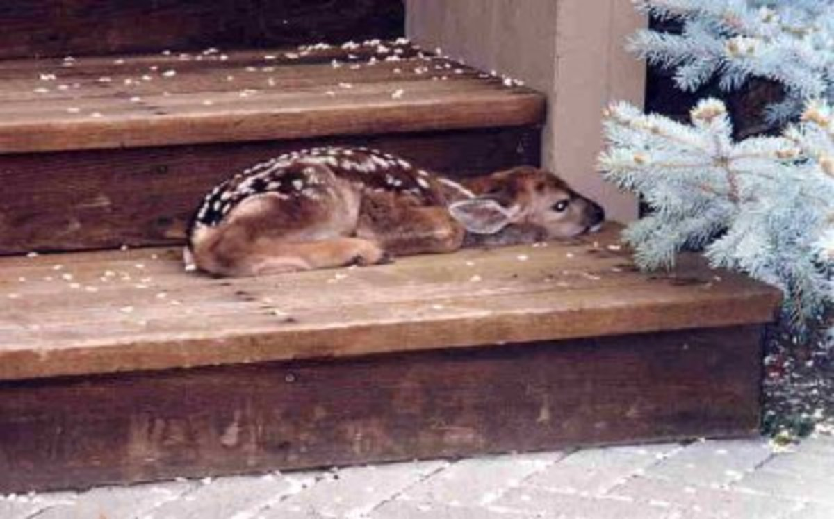 Operation: Covert Fawn