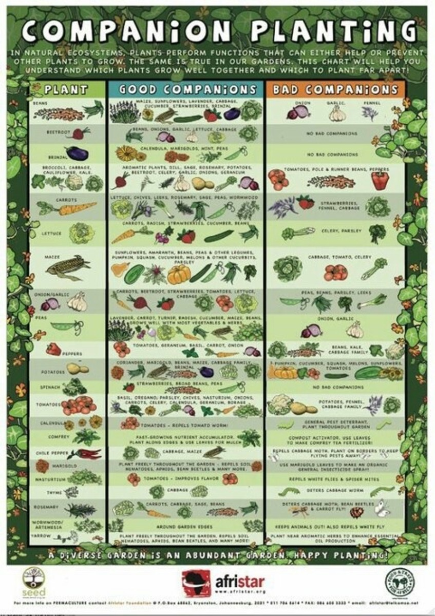 Vegetables That Grow Well Together
