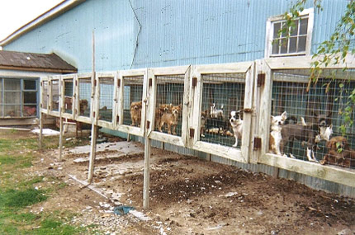 Amish Country Puppy Mill
