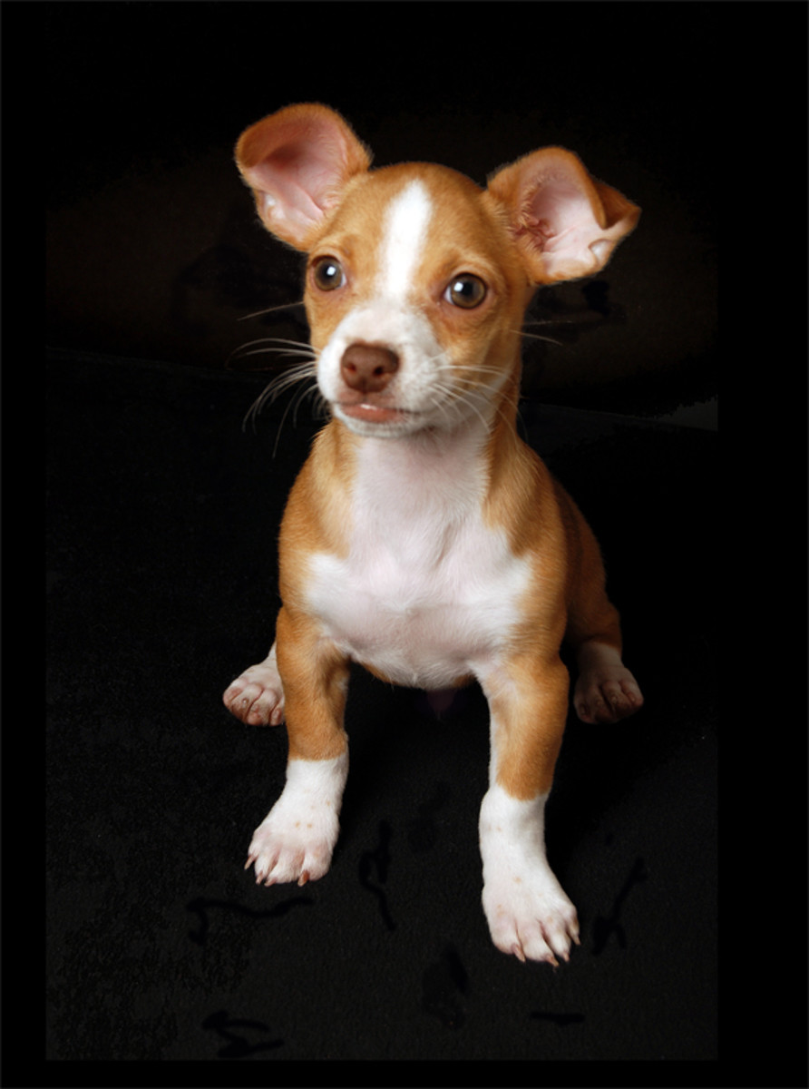 Puppy Mill Dogs, Do You Own One? Take DNA Test - Get Full Refund And Keep Your Dog Too!