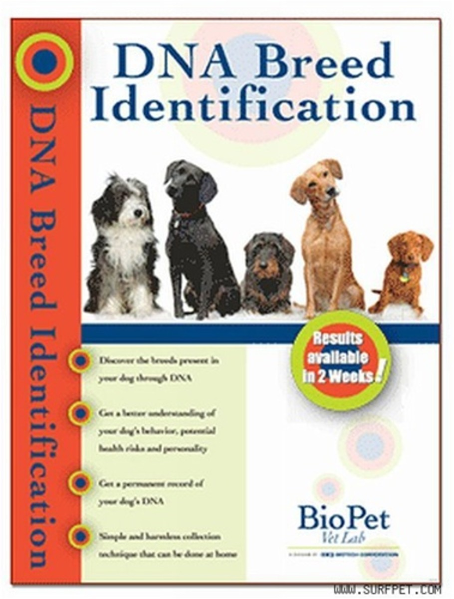 Dog DNA Tests are available on the internet