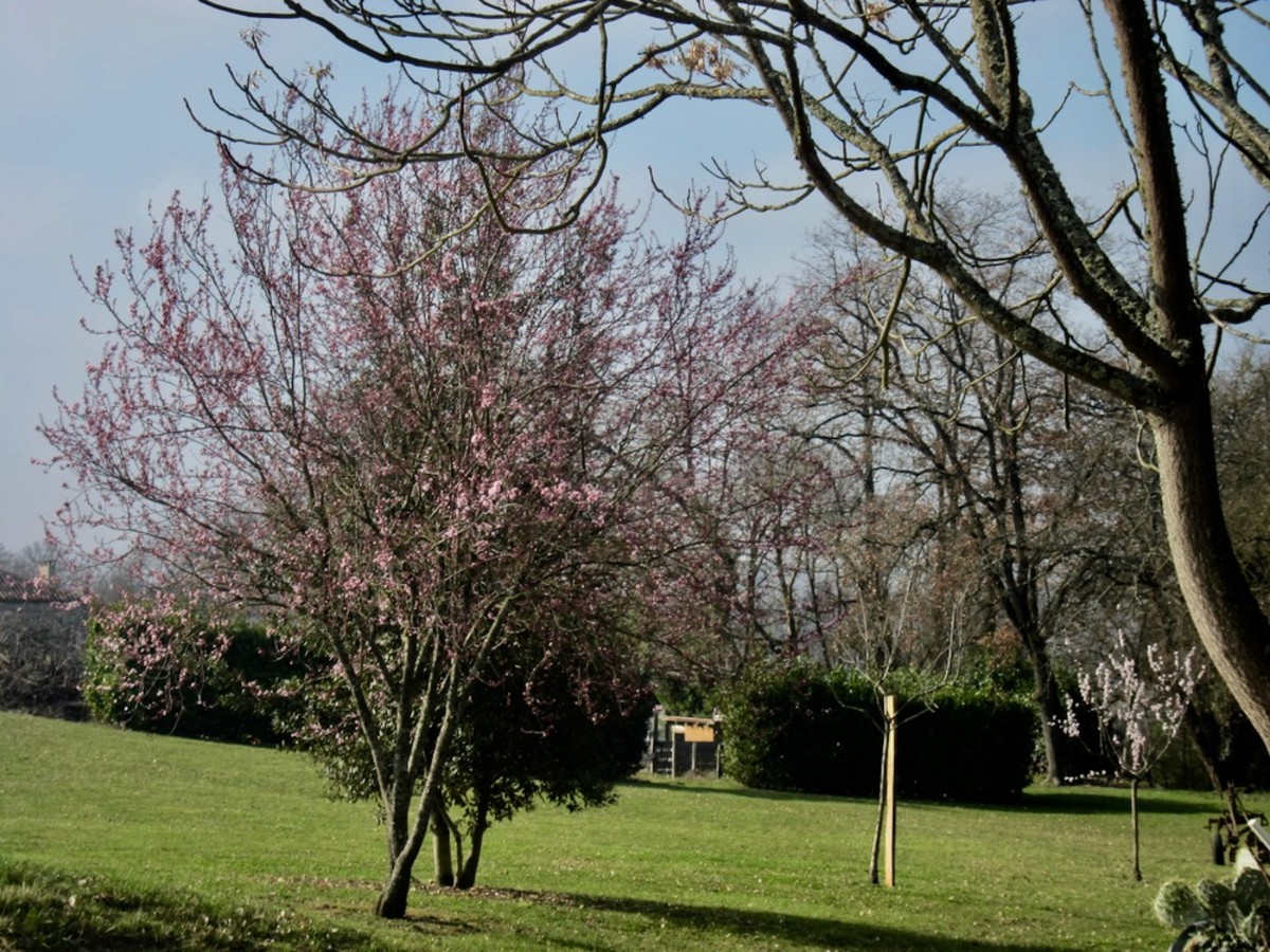 Spring in Condom-en-Armagnac