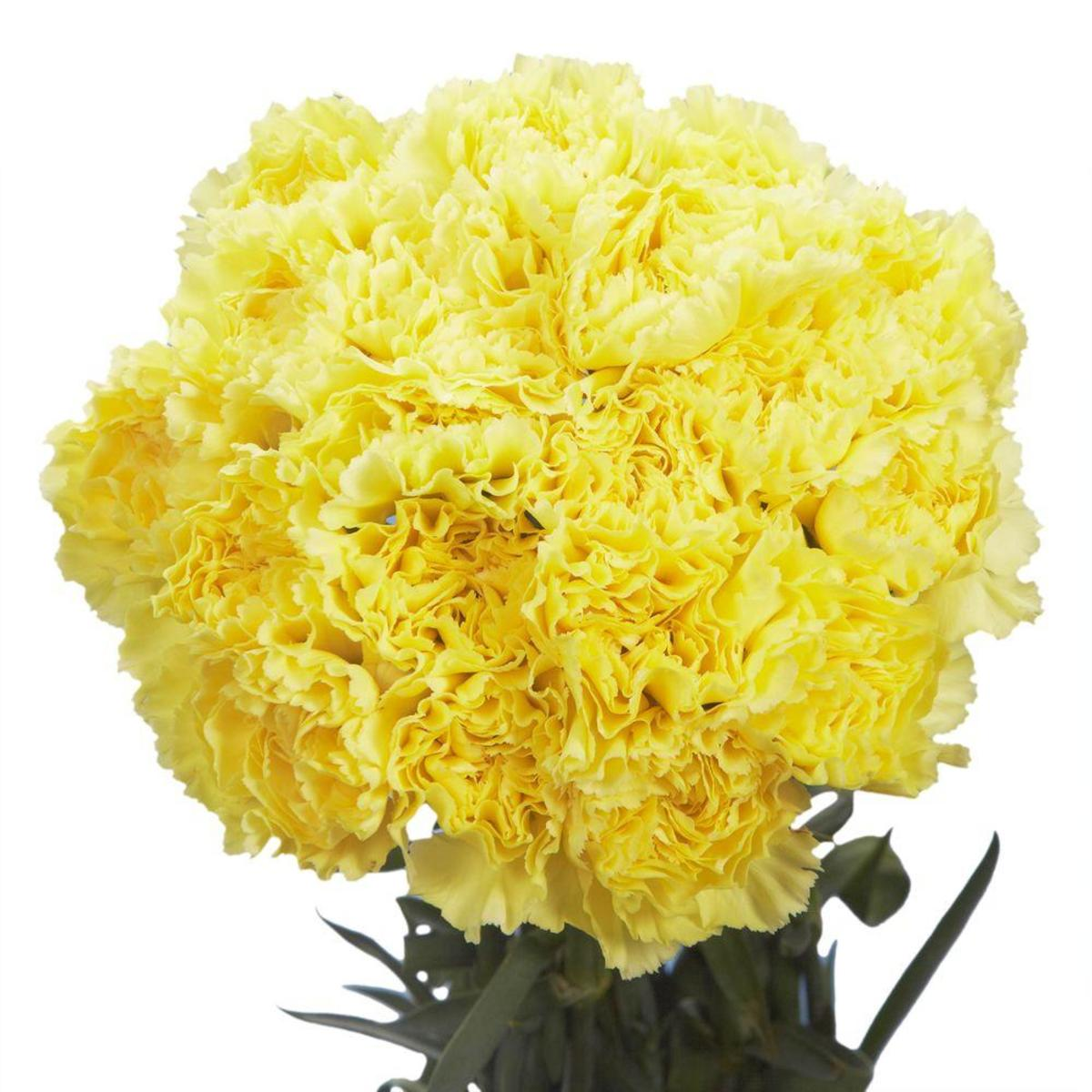 A yellow carnation bouquet looks simple yet beautiful.