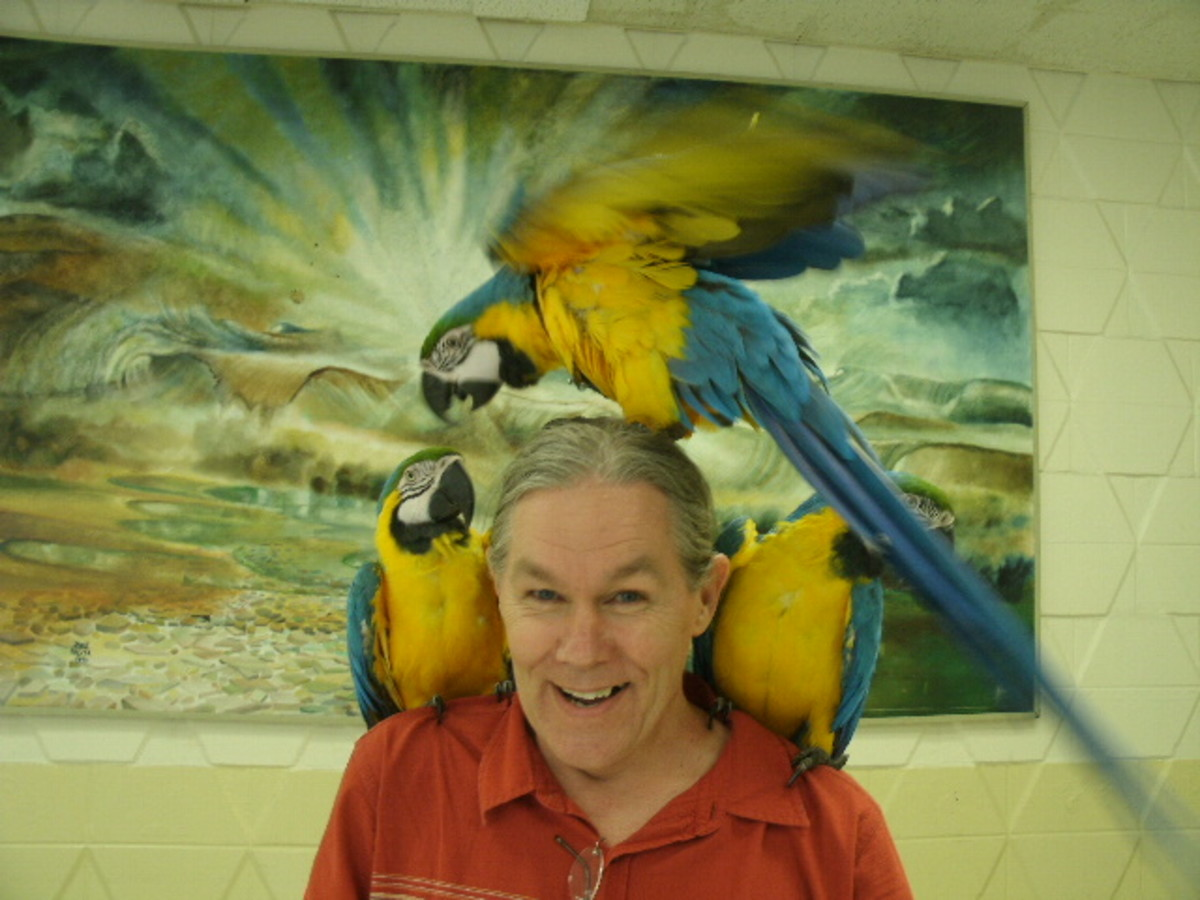 I got to meet the parrots too