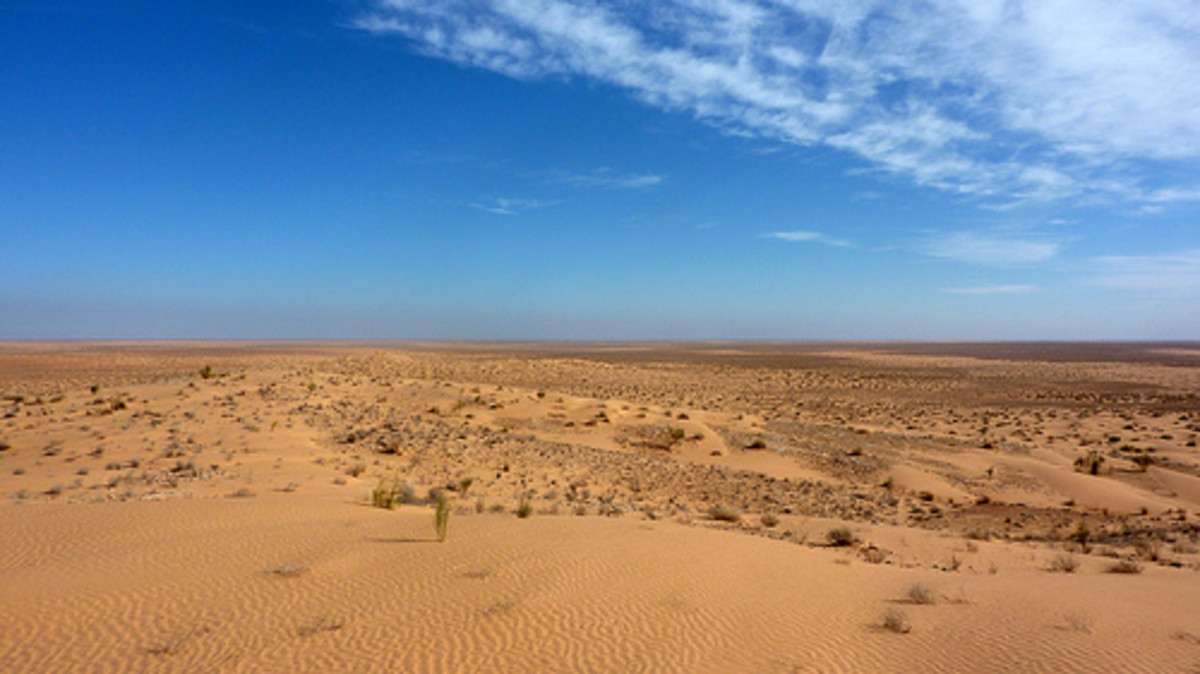 The Saharan Desert