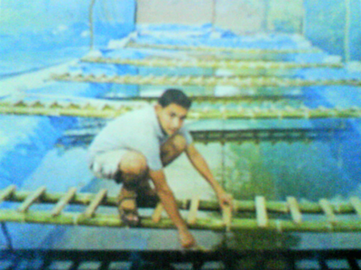 Ravi kiran busy with pearl cultivation